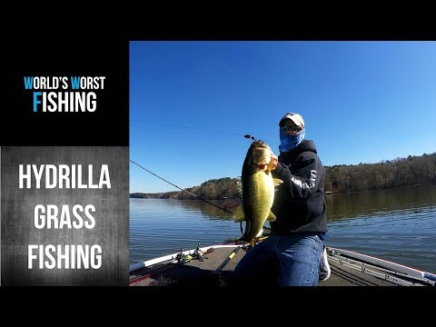 Getting Started With Grass Fishing: Lake Seminole Hydrilla