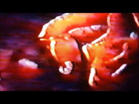 GG ALLIN - SWANK FUCKIN' - MUSIC VIDEO