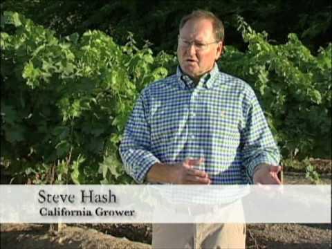 California Grower Steve