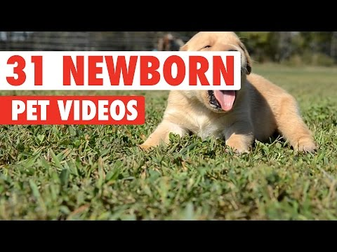 31 Newborn Pets Video Compilation 2016