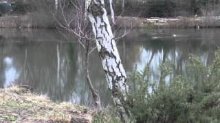 HOLLYBUSH LAKES, ALDERSHOT, HAMPSHIRE