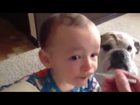 Смешные видео про собак до слез