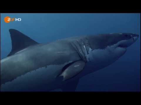 ᴴᴰ Terra X  Universum der Ozeane  ZDF Doku