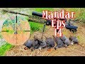 Berburu Burung Mandar {Common Morhen } Eps14