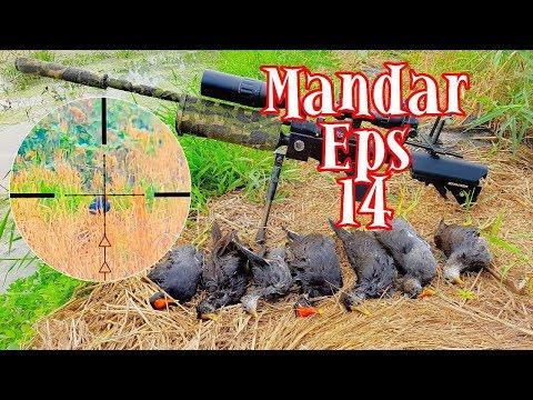 Berburu Burung Mandar {Common Morhen } Eps14