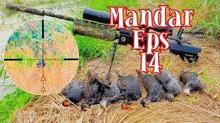 Berburu Burung Mandar Common Morhen  Eps14