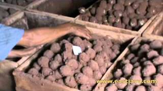 Salted Egg Industry