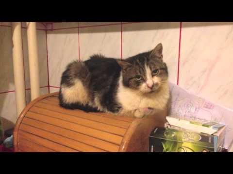 Historia pewnego kota