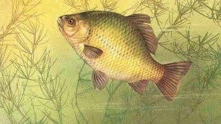 Клёвая рыбалка карася - 9 мая 2015 год! Отличная рыбалка! ч.1