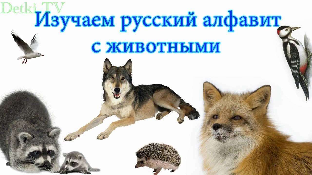 Учим алфавит с животными. Азбука для детей 3 лет. Учим ...
