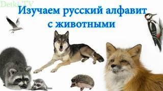 Учим алфавит с животными. Азбука для детей 3 лет. Учим буквы и животных – развивающий мультик
