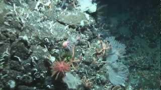 Journey Across an Underwater Landscape