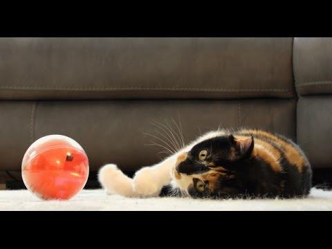 PlayDate: World's First Pet Camera in a Smart Ball