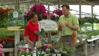 Replacement shade annuals for impatiens