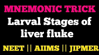 TRICK FOR LARVAL STAGES OF LIVER FLUKE FASCIOLA HEPATICA FOR AIIMS NEET JIPMER