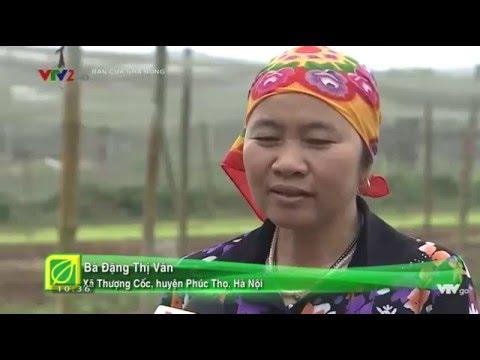 Rau 5 không Bạn của nhà nông hiệu quả cao VTV2