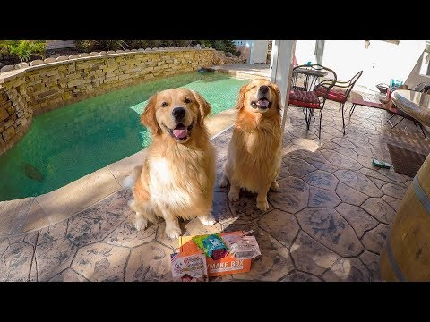 Oshie And Reagan June Mail Call | Golden Retriever VLOG