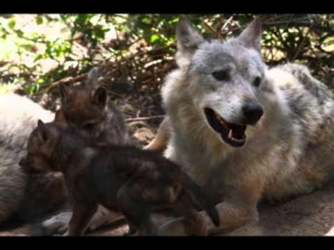 Danse avec les loups (pour Choeur, Hautbois et piano)