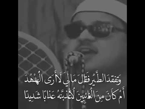 روائع التلاوات تلاوات خاشعة الشيخ ممدوح عامر .وتفقد الطير