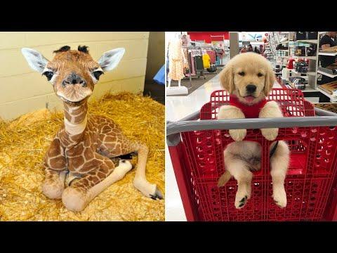 Baby Pets 🔴 Funny Cats and Dogs Videos Compilation (2020) Perros y Gatos Recopilación