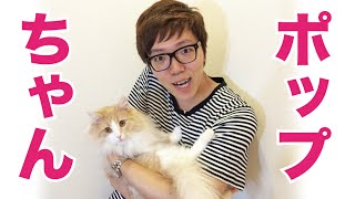 PDSの猫『ポップ』に会って来た!ヒカキン初のご対面! thumbnail