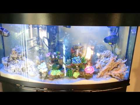 75 Gallon Saltwater Fish Tank Setup -- April 14, 2013