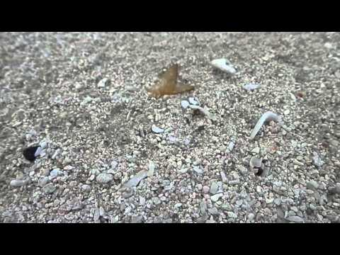 Bohol: Ant on the beach