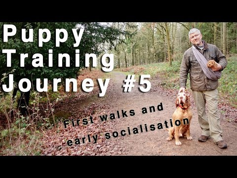 Puppy Training Journey #5. First walks and puppy socialisation