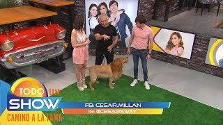 Amor perruno: César Millán nos enseña a domesticar a tu peludo si está muy consentido.