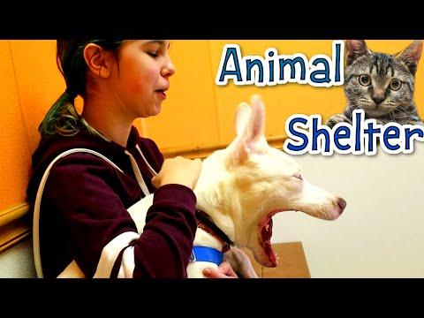 ANIMAL SHELTER VLOG EP3 | WALKING DOGS & PETTING CATS | RADIOJH AUDREY