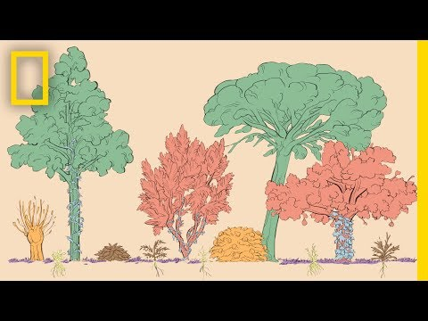 A Forest Garden With 500 Edible Plants Could Lead to a Sustainable Future | Short Film Showcase
