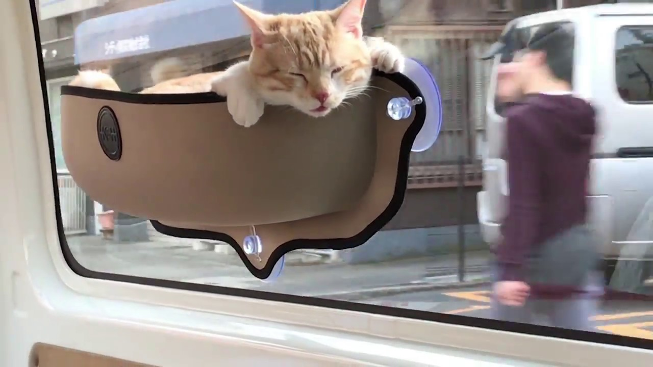 Cat Travels In Car Sitting Pocket