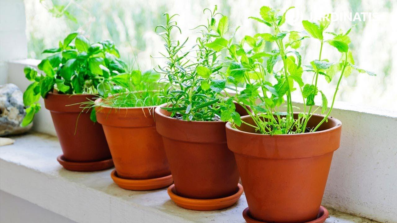 Plantas Aromáticas De Interior Y Exterior Bricomanía Jardinatis Youtube