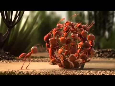 Funny Penguins, Ants & Crabs Video
