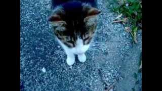 Yann Tiersen  - A Quai -    (la Lavanda)