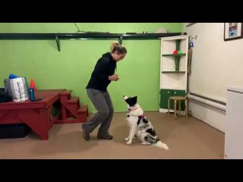 Video 3 for application CTDI to Do More With Your Dog from Rachelle Turgeon