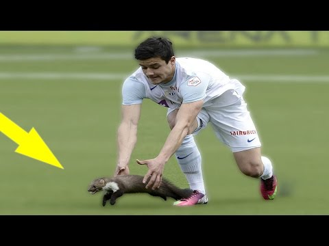 Thumbnail: Top 10 Animals In Football