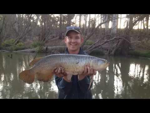 Dawson River Saratoga Fishing