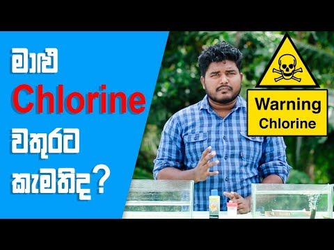 How To Use Chlorinated Water (ක්ලෝරින් වතුර) For Your Fish Tank FishFix SriLanka