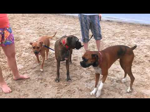 Lake Michigan Dog Beach Party 2013