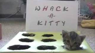 Whack-A-Kitty thumbnail