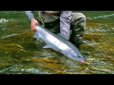 Where Are The Winter Steelhead? - Steelhead Fishing Tips & Tricks!