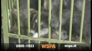 WSPA tv spot baby dieren in nood