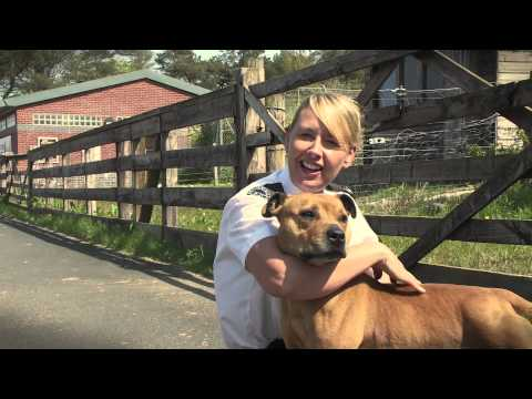 Scottish SPCA Staffie Song