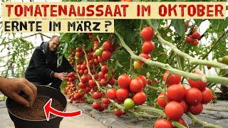 Tomaten für den Winter im Haus? Wir säen Tomaten aus + Tour durch die Tomaten Gewächshäuser Oktober