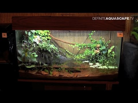 6th Silesian Aquarium Weekend 2014 (pt.7) - Association of Fishkeepers from Upper Silesia