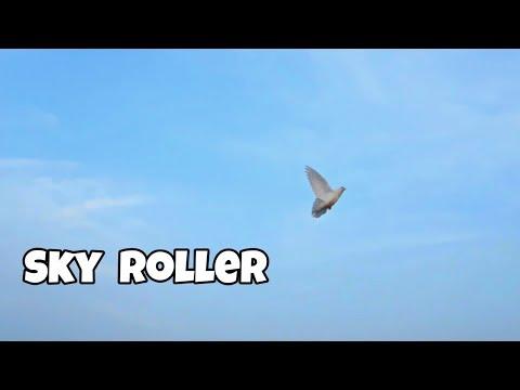 Roller Pigeon Part 11    Amazing Sky Roller Pigeon    Tumbler Pigeons    NEEL BIRDS