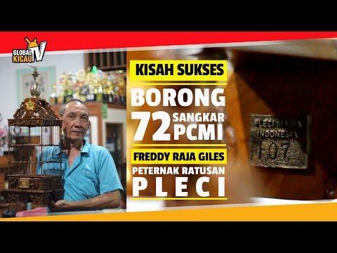 KISAH SUKSES : Freddy Raja Giles BORONG 72 Sangkar PCMI Dan RATUSAN JUTA Beli Pleci Tembak Gacor