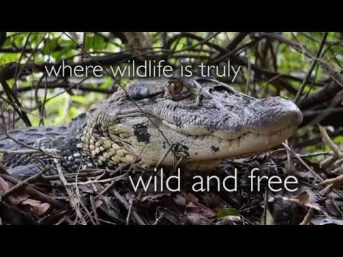 Visit the Tapiche Reserve (Iquitos, Peru) for the best jungle adventure, 2 min Intro