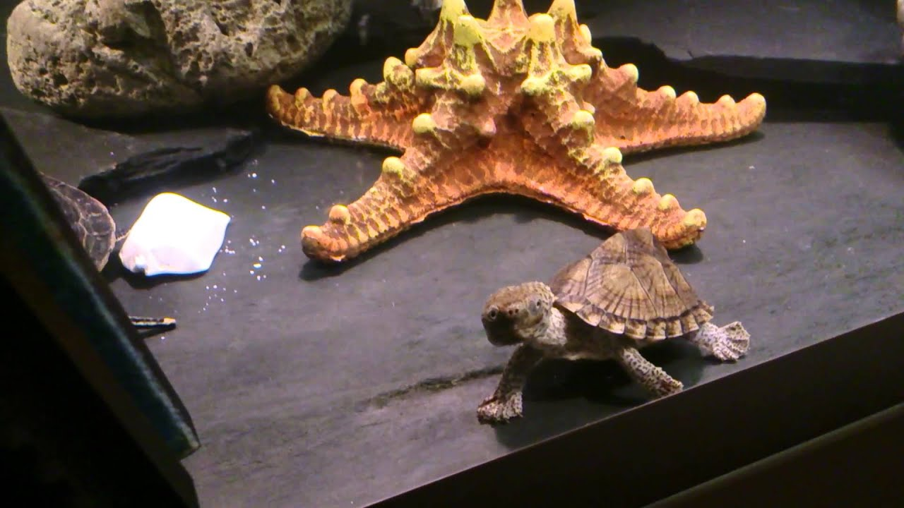 Aquarium tortue d eau youtube for Aquarium tortue